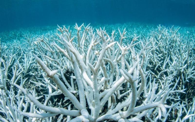 अस्ट्रेलियाको २०५० सम्ममा शुद्ध शून्य उत्सर्जनमा पुग्ने वाचा